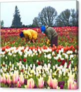 Migrant Workers In The Tulip Fields Canvas Print