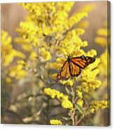 Migrating Monarch Butterfly Moses Cone Memorial Park North Carolina Canvas Print