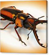 Military Stag Beetle Canvas Print