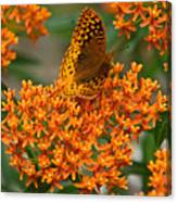 Milkweed And A Frittalary Canvas Print