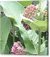 Milkweed Barcode No2 08 8 2008 Canvas Print
