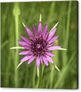 Milkweed Flower Canvas Print