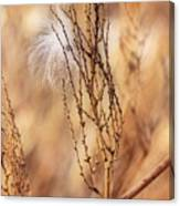 Milkweed In The Breeze Canvas Print
