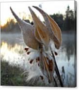 Milkweed Pods Seeds Canvas Print