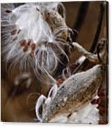 Milkweed Silk Canvas Print