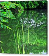 Mill Pond Reflections Canvas Print