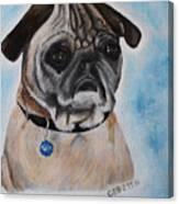 Millie The Pug 2016 Canvas Print