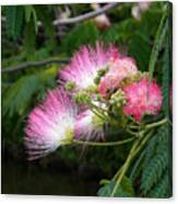 Mimosa On The Lake Canvas Print