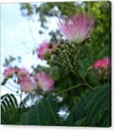 Mimosa Sky Canvas Print
