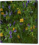 Mimulus And Vetch Canvas Print