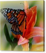 Mingle With A Monarch Canvas Print