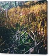 Mini-forest Canvas Print