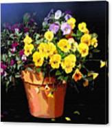 Mini Pansy Pot Canvas Print