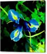 Miniature Blue Iris Canvas Print