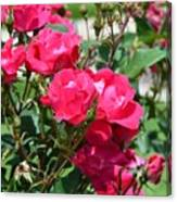 Miniature Roses Canvas Print