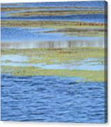 Brazos Bend Wetland Abstract Canvas Print