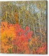 Minnesota Autumn 55 Canvas Print