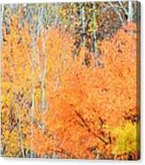 Minnesota Autumn 58 Canvas Print