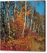Minnesota  Autumn Path Canvas Print