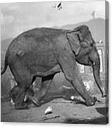 Minnie The Elephant, 1920s Canvas Print