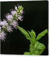 Mint Flower Canvas Print