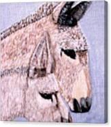 Mischievous Burros Canvas Print