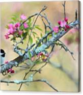 Miss Chickadee Canvas Print