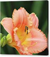 Miss Tinkerbell Daylily Canvas Print