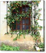 Mission Window With Yellow Flowers Vertical Canvas Print