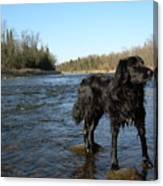 Mississippi River Dog On The Rocks Canvas Print