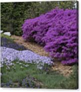 Missouri Botanical Garden Purple Azaleas Dsc01692 Canvas Print
