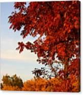 Missouri Fall Canvas Print