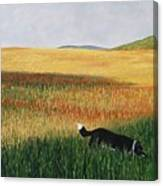 Missy In The Field Canvas Print