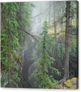 Mist Forest Canvas Print