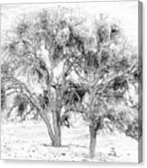 Mistletoe Tree In Black And  White Canvas Print