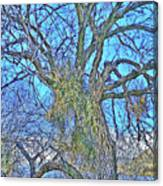 Mistletoe Tree Canvas Print