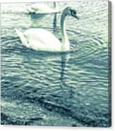 Misty Blue Swans Canvas Print