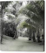 Misty Hawaiian Garden Canvas Print