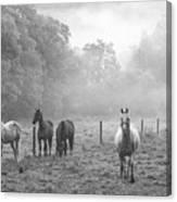 Misty Morning Horses Canvas Print