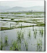 Misty Morning In China Canvas Print