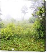 Misty Morning In The Glades Canvas Print