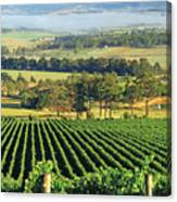 Misty Morning In Yarra Valley Vineyards Near Healesville, Victoria, Australia Canvas Print