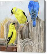 Misty Morning Meadow- Goldfinches And Bluebird Canvas Print