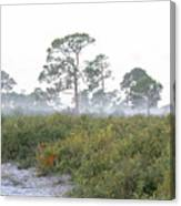 Misty Morning On The Trail Canvas Print