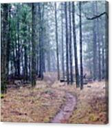 Misty Morning Trail In The Woods Canvas Print