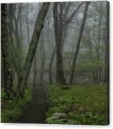 Misty Path Canvas Print