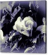 Misty Rose Of Sharon Canvas Print