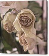 Misty Rose Tinted Dried Roses Canvas Print