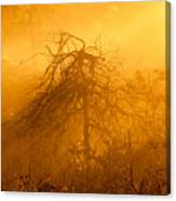 Misty Swamp Sunrise Canvas Print