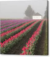 Misty Tulip Fields Iv Canvas Print